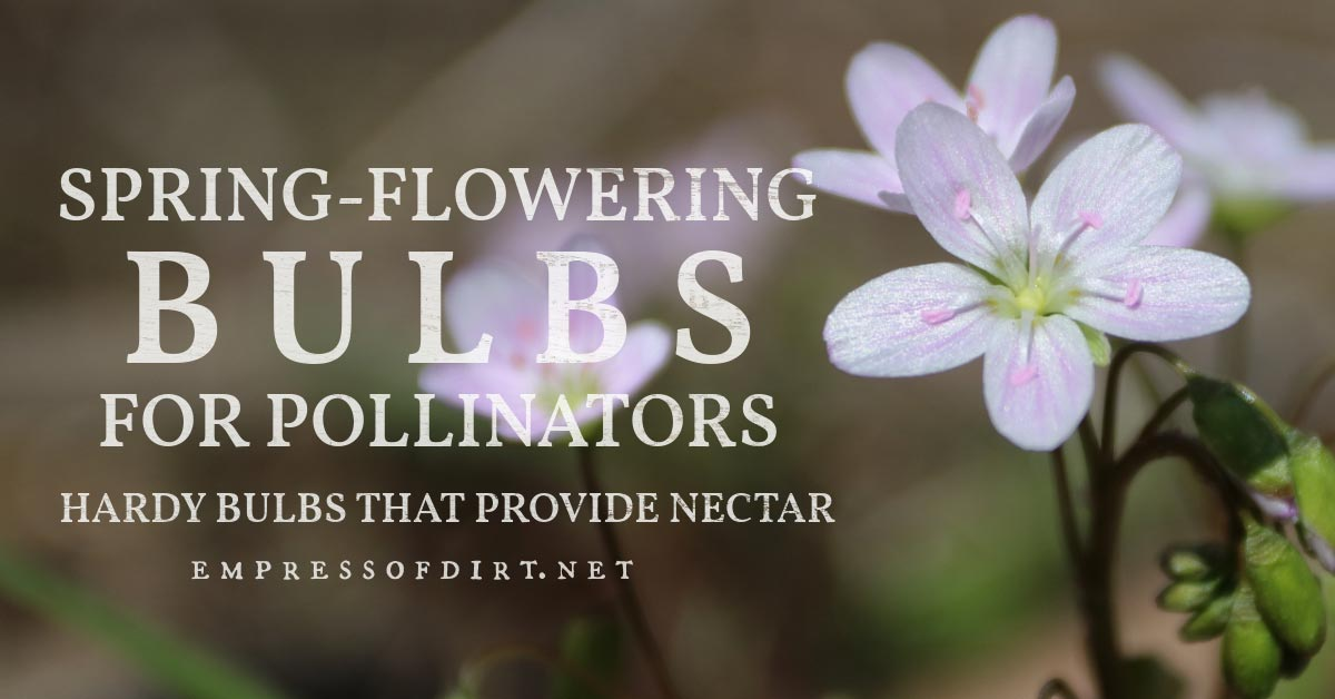 Flower bulbs that blooms in spring providing food for pollinators.
