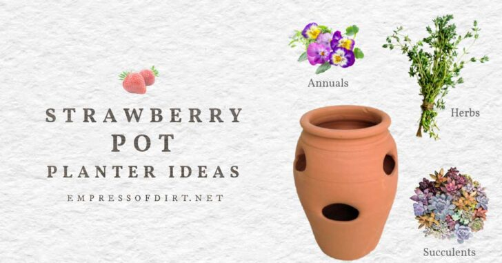 Strawberry pot, pansies, herbs, and succulents.