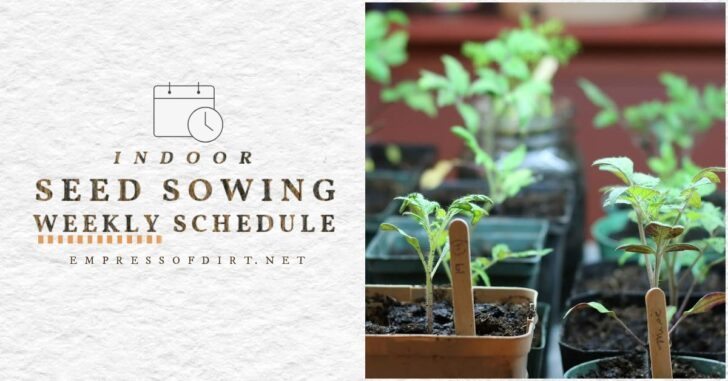 A calendar and seedlings to help grow plants right on time.
