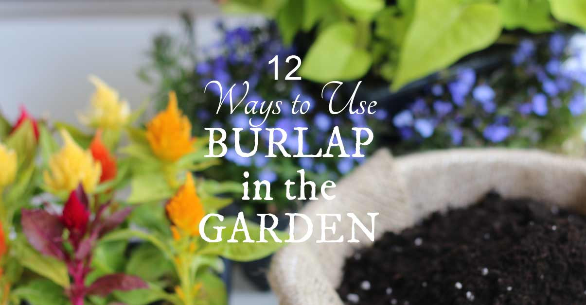12 Ways To Use Burlap In The Garden + Craft U0026 Decor Ideas   Empress Of Dirt