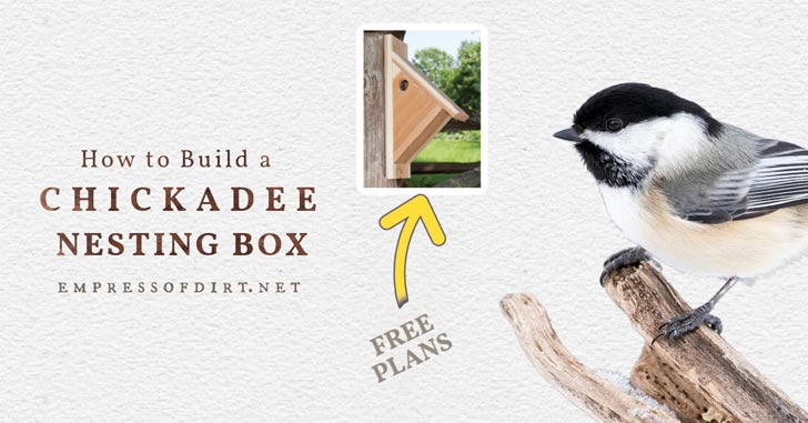 Chickadee and a chickadee nesting box.
