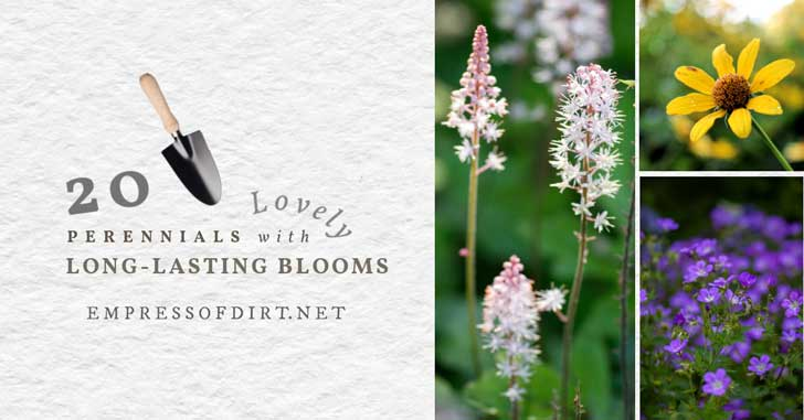 Plants that flower for long periods of time.