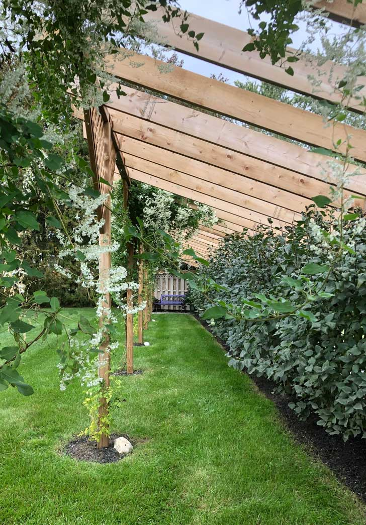 Fence extension with silver lace vine.