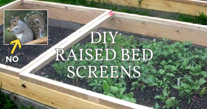 DIY wood-framed screens with hardware cloth to keep animals out of raised garden beds.