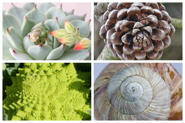 The Beauty of the Fibonacci Sequence in the Garden