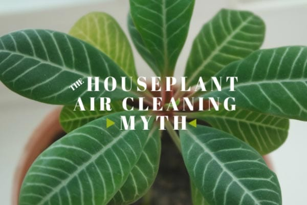 Exploring the myth around houseplants and air purification.