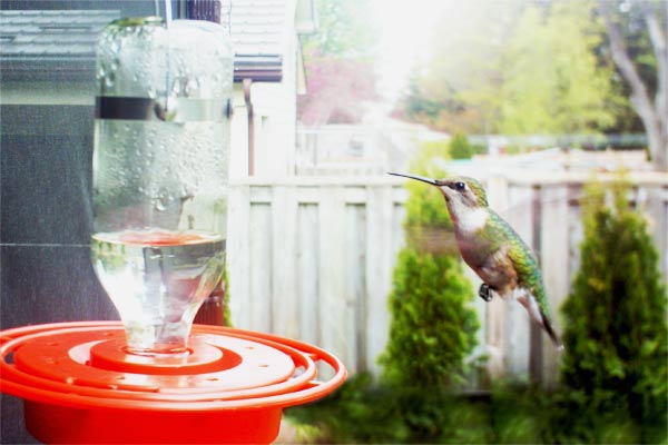 How to Make Hummingbird Food & Choose a Feeder