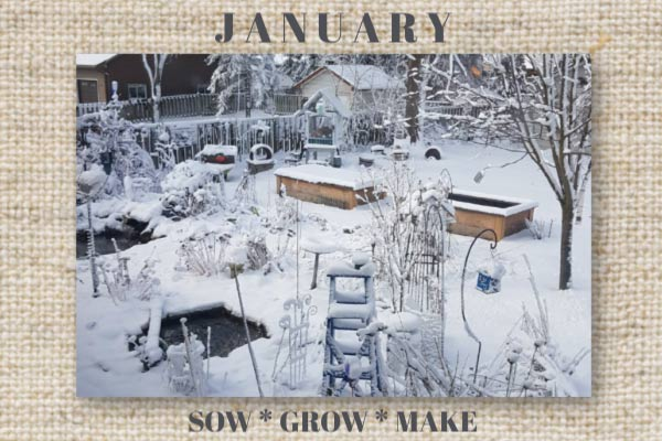 It's quiet in the January garden. Winter birds rely on the old perennial growth for food and habitat.