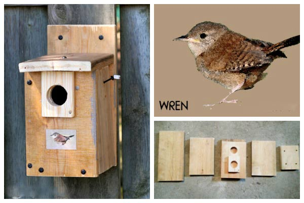 Free Nesting Box Building Plans for Wild Birds | Empress of Dirt on bluejay bird house plans, woodpecker bird house plans, horned owl bird house plans, bat bird house plans, house finch bird house plans, moose bird house plans, duck bird house plans, western bluebird bird house plans, brown-headed cowbird bird house plans, hummingbird bird house plans,