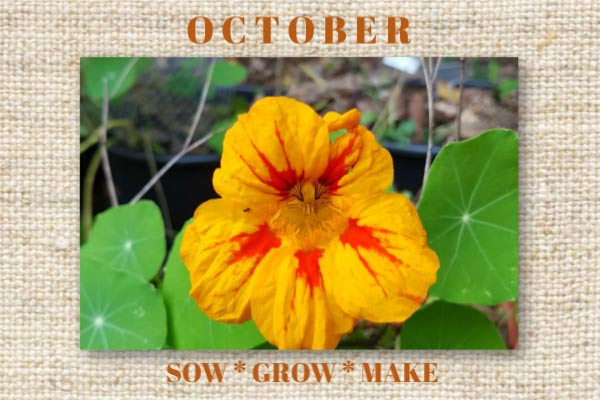 October is a busy time in the garden. There is plenty to harvest, sow, prepare, protect, and get crafty with!