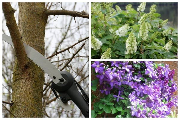 Need to Prune or Trim? Check Here First