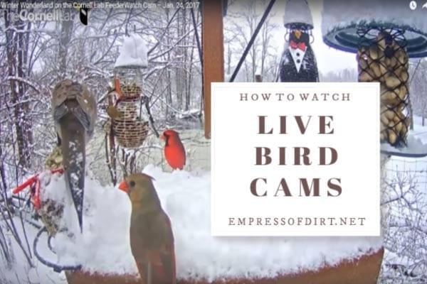Birds at feeder in winter.