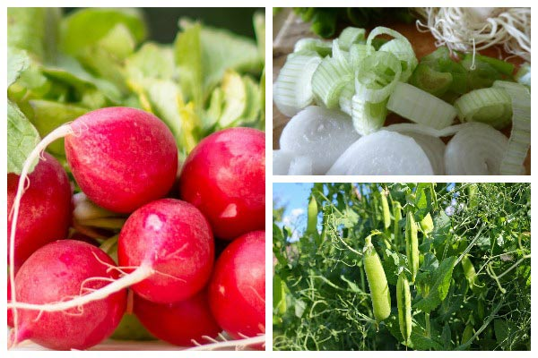 Quick-growing veggies for spring and fall cool-weather growing.