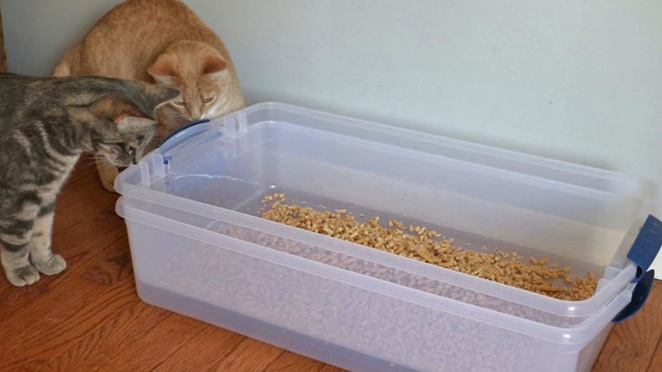 Cats at litter box with pine pellets