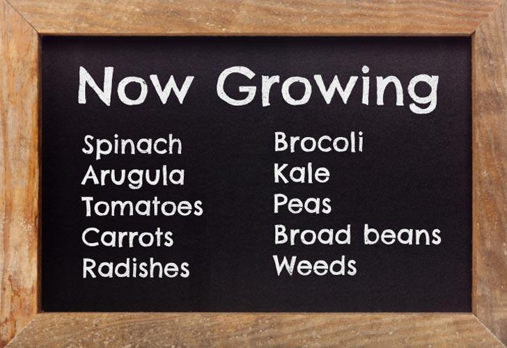 Chalkboard garden sign listing vegetables now growing.