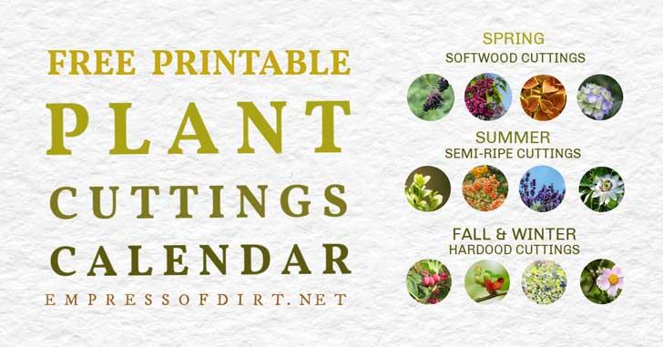 Calendario de propagación de esquejes de plantas de Seasoanl