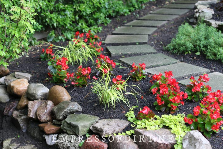 Red begonia flowers along a garden path.