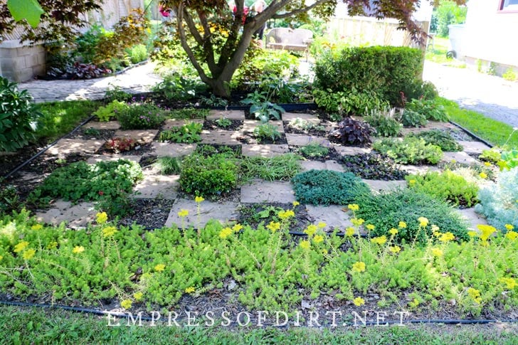 Checkerboard garden with paving stones and herbs.
