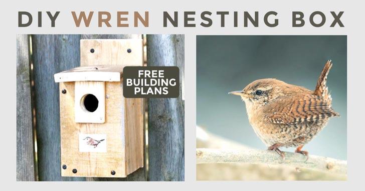 Wren bird and nesting box.
