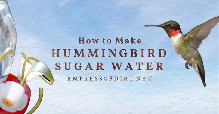 Hummingbird landing at sugar water feeder.