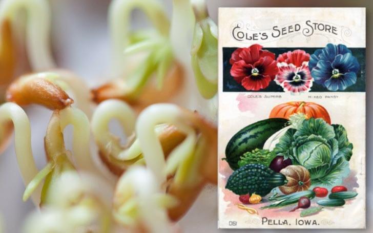 Germinating seeds and image of vintage seed packet.