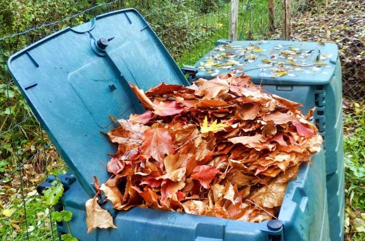Fall leaves in yard waste bin.