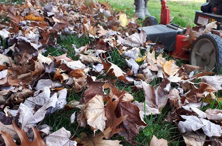 Mowing fall leaves.