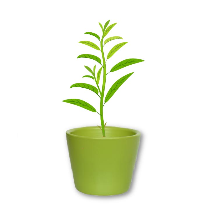 Young peach tree planted in a green flower pot.