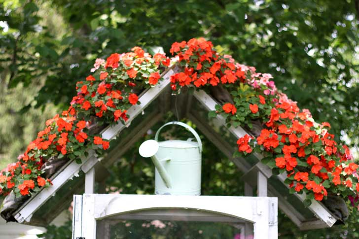 Flowers growing in a hanging shoe organizer.