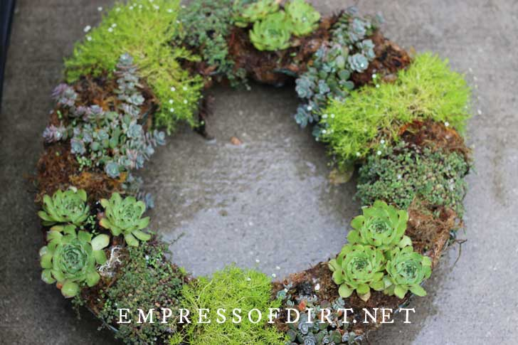 Garden wreath decorated with succulents.