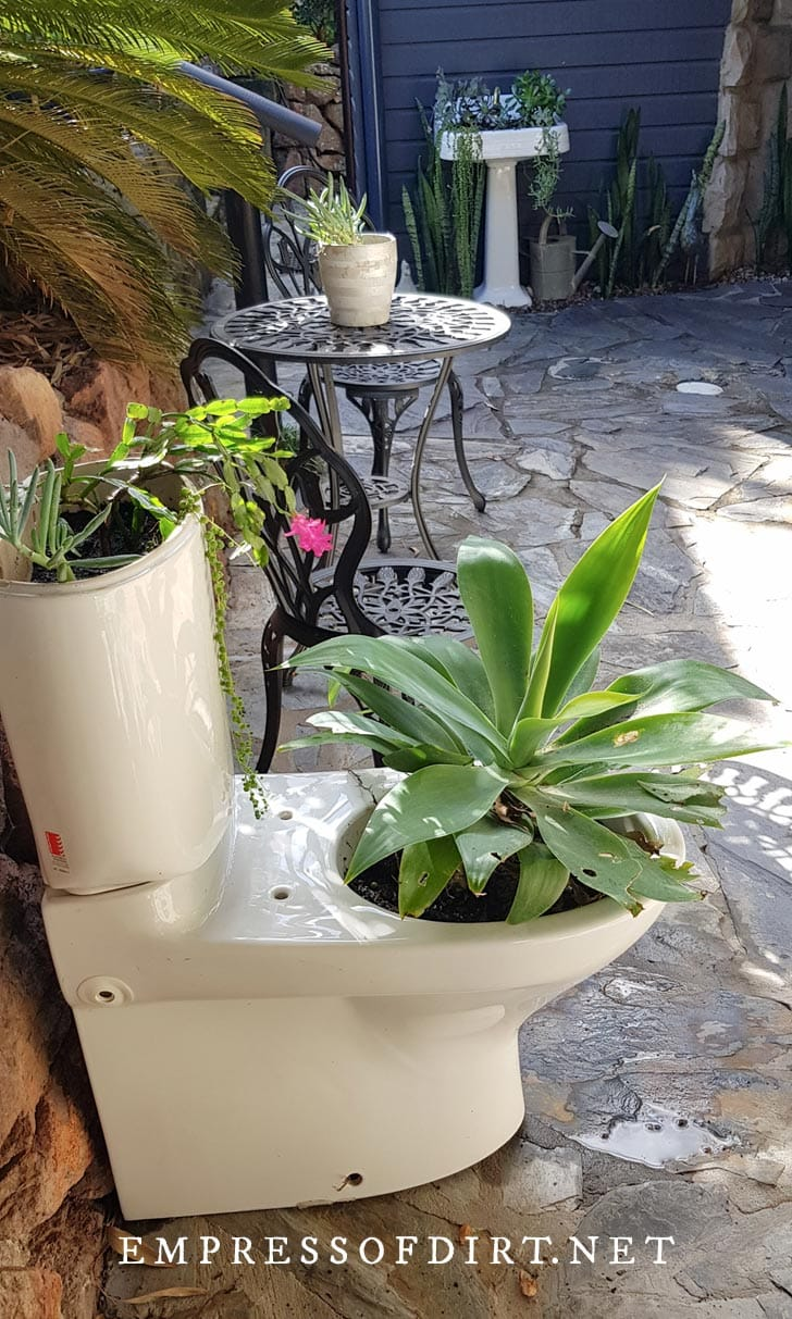 Repurposed toilet planted with agave and succulents.