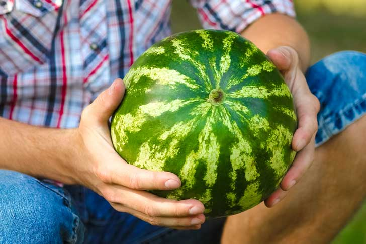 Checking watermelon for sounds.