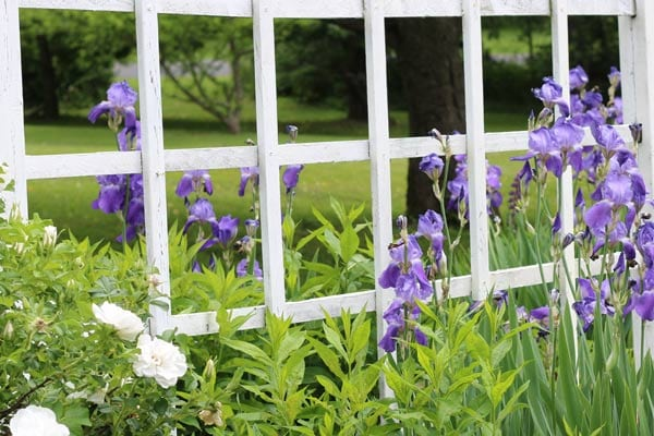 Fence Ideas for Gardeners