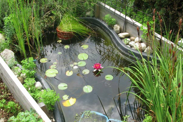 Fish Pond Tips and Ideas for Gardeners