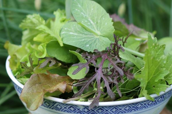 Indoor Kitchen Garden | Grow Veggies & Herbs in Your Home