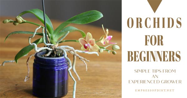 Growing an orchid in a jar.