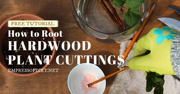 How to root hardwood plant cuttings.