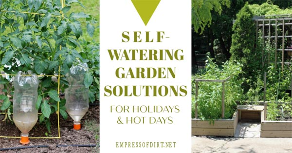 Practical ways to keep your garden watered.
