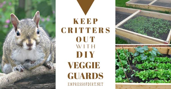 Veggie guards to keep pests out of garden beds.