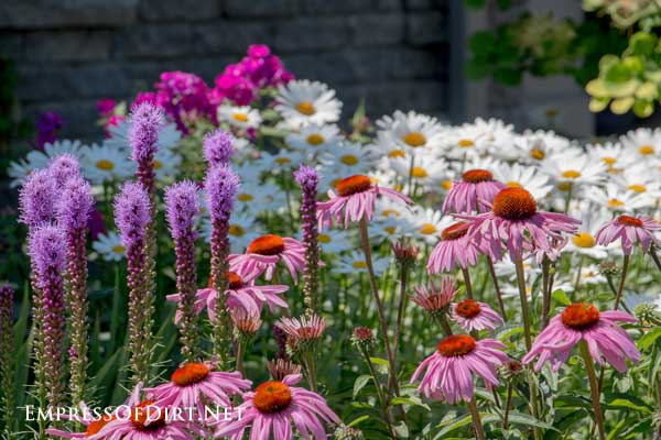 Flowering perennials in the backyard garden