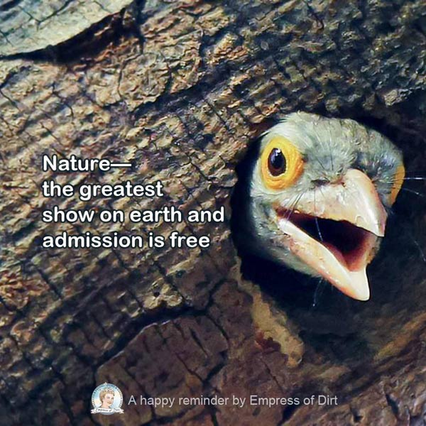 Nature: the greatest show on earth and admission is free. And sometimes it's rather amusing!