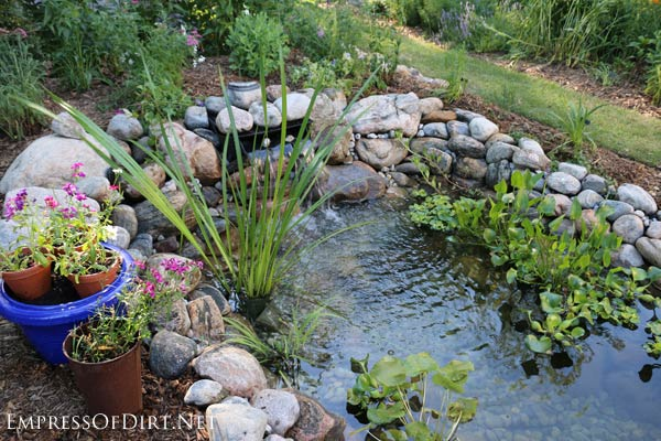 Newly built backyard garden pond with aquatic plants.