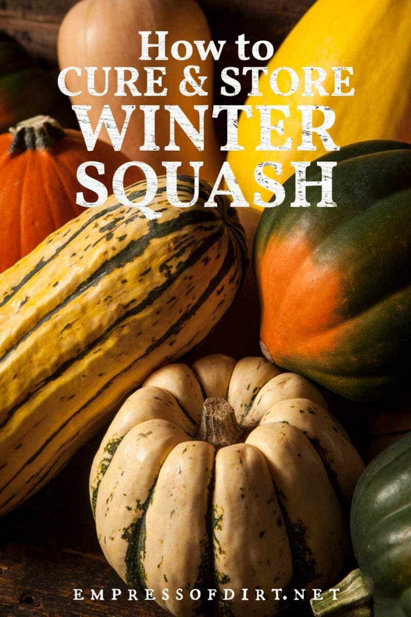 Winter squashes ready for storage.