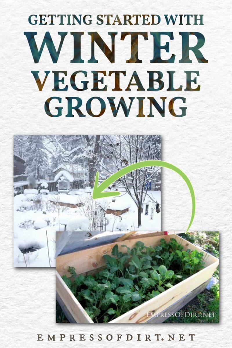 Backyard winter vegetable garden in the snow.