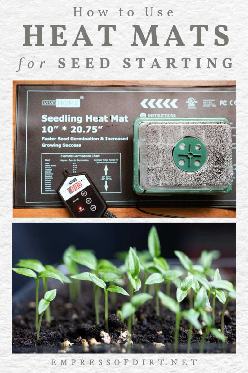 Heat mat and seedlings.