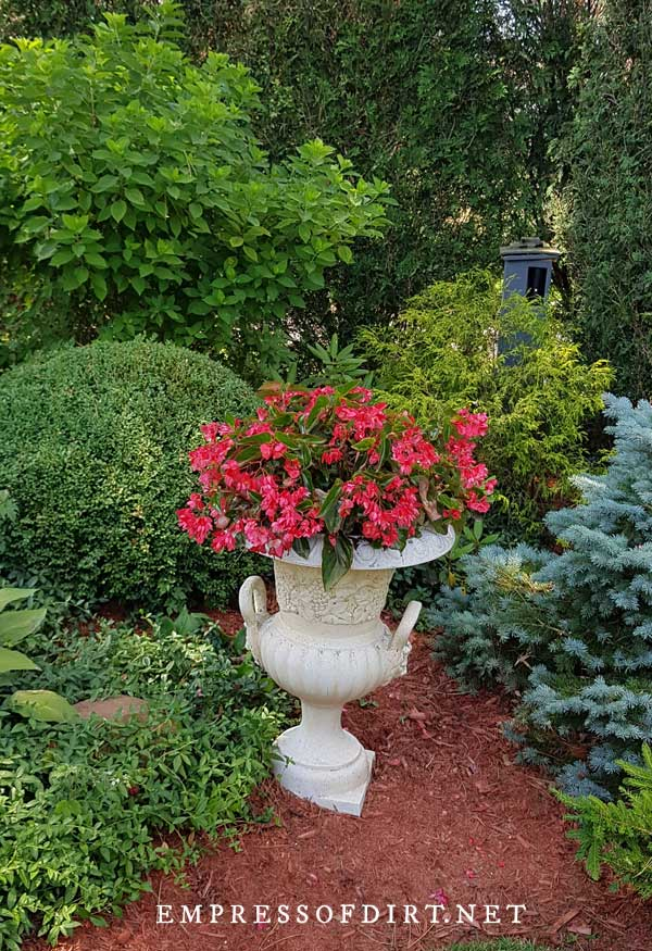 Bold red flowers in white garden urn.