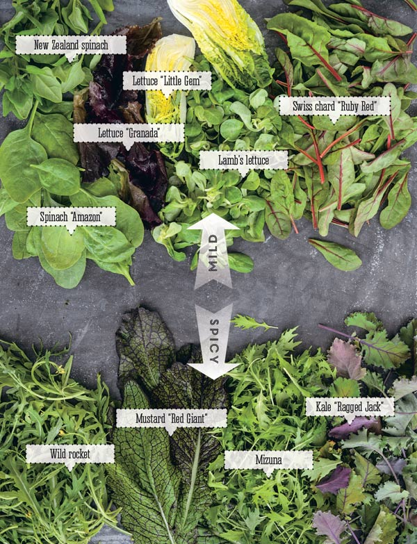 Grow for Flavor by James Wong featuring tips and tricks to supercharge the flavor of homegrown harvests.