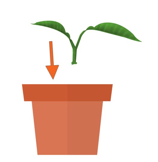 Diagram showing inserting plant cutting in flower pot.