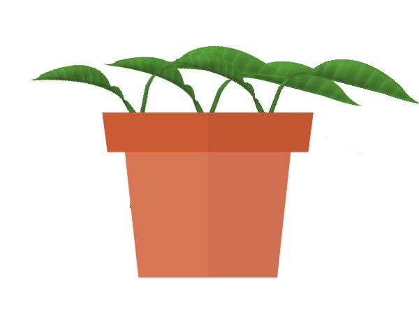Diagram showing plant cuttings rooting in flower pot.