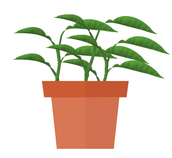 Diagram showing plant cuttings growing in flower pot.